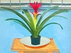 \'Bromiliad on a Table\'